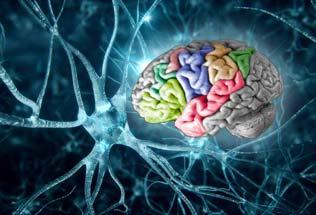 Sobre neuronas, recuerdos, ética y moral